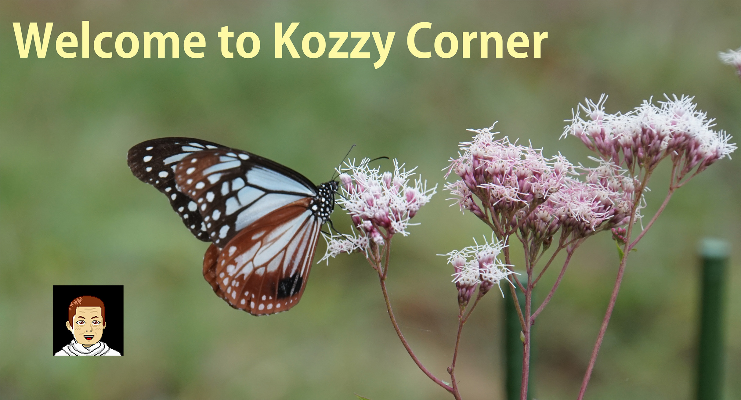 Welcome to Kozzy Corner